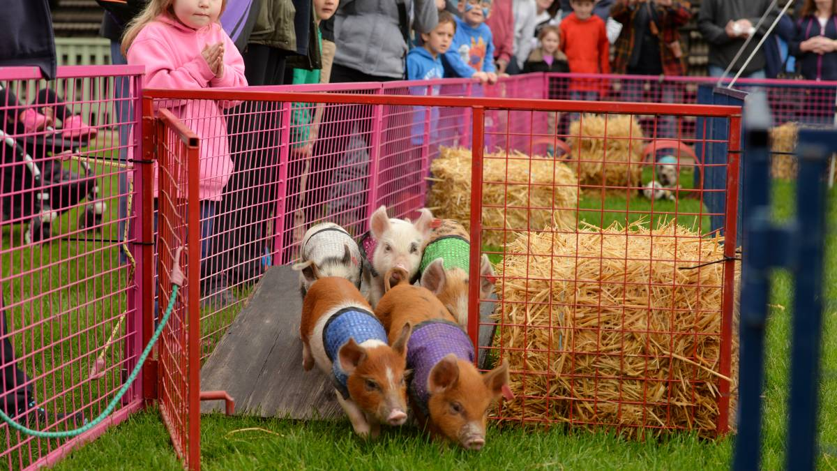 noahs-pig-racing